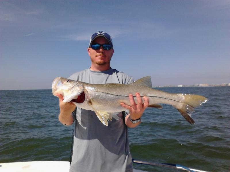Sarasota Bay Snook gulf offshore inshore