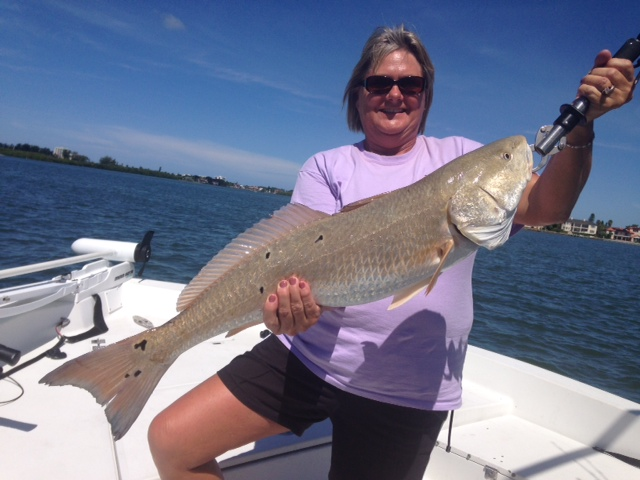 Inshore addict charters fishing reports for Sarasota bay fishing report